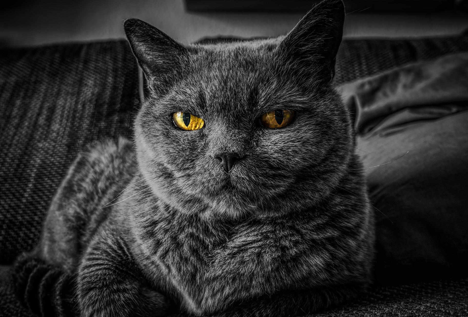 ピュレストの悪い口コミを厳しい目で見る猫