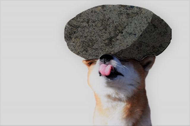 重たい石を頭に乗っけられた犬