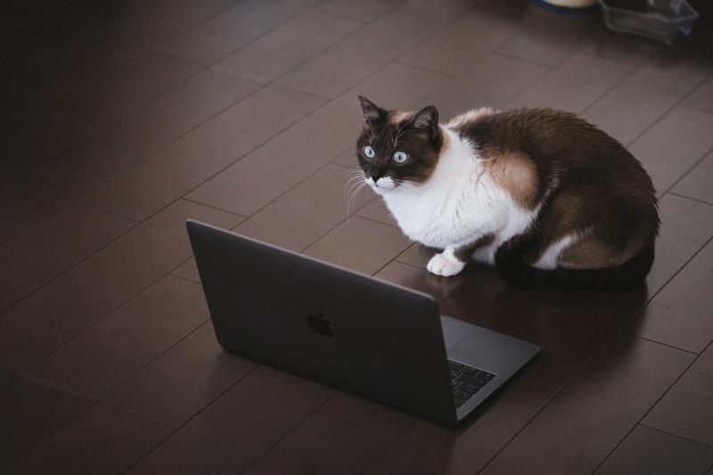 市販ウォーターサーバーのデメリットを発見した猫
